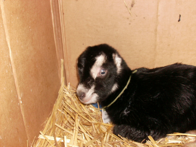 1 Day old